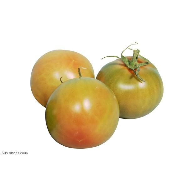 Tomata rodona plena ( kg )