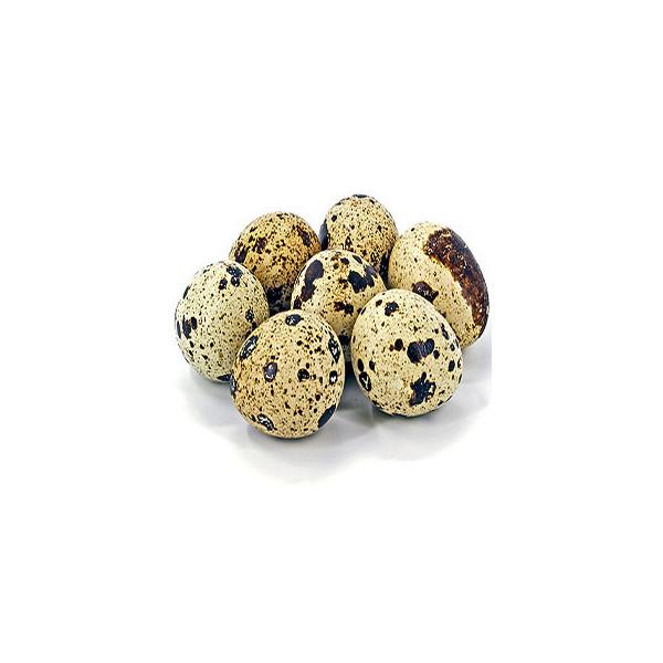 ous de guatlla